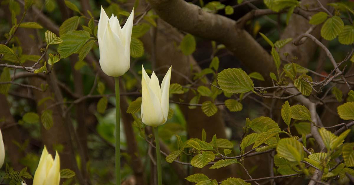 Пролет в бяло