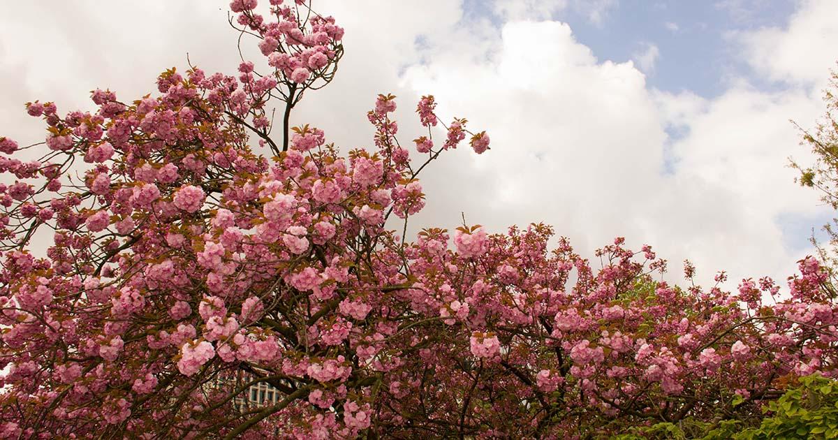 Небе и розов цвят