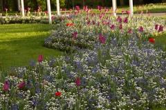 Цветни алей на пролет