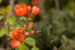 Пролетен цвят в свежо оранжаво