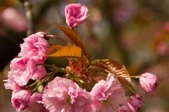 Розово природно вълшебство
