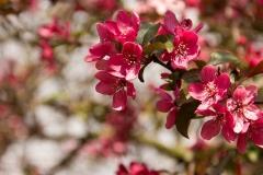 Прекрасен пролетен цвят
