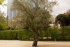 Самотното дърво