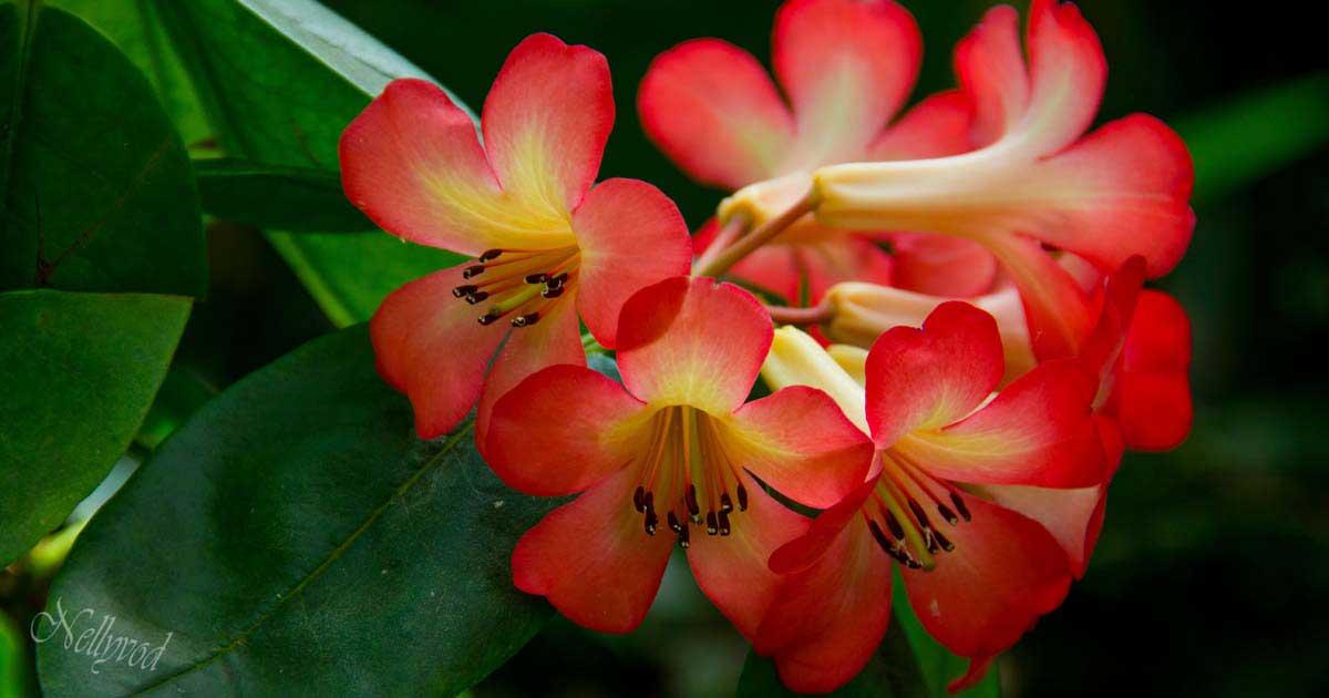 Singapure-Botanic-15