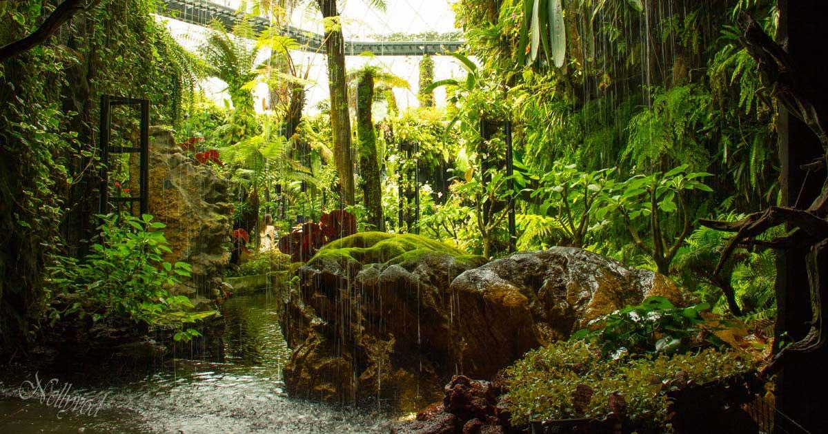 Singapure-Botanic-21