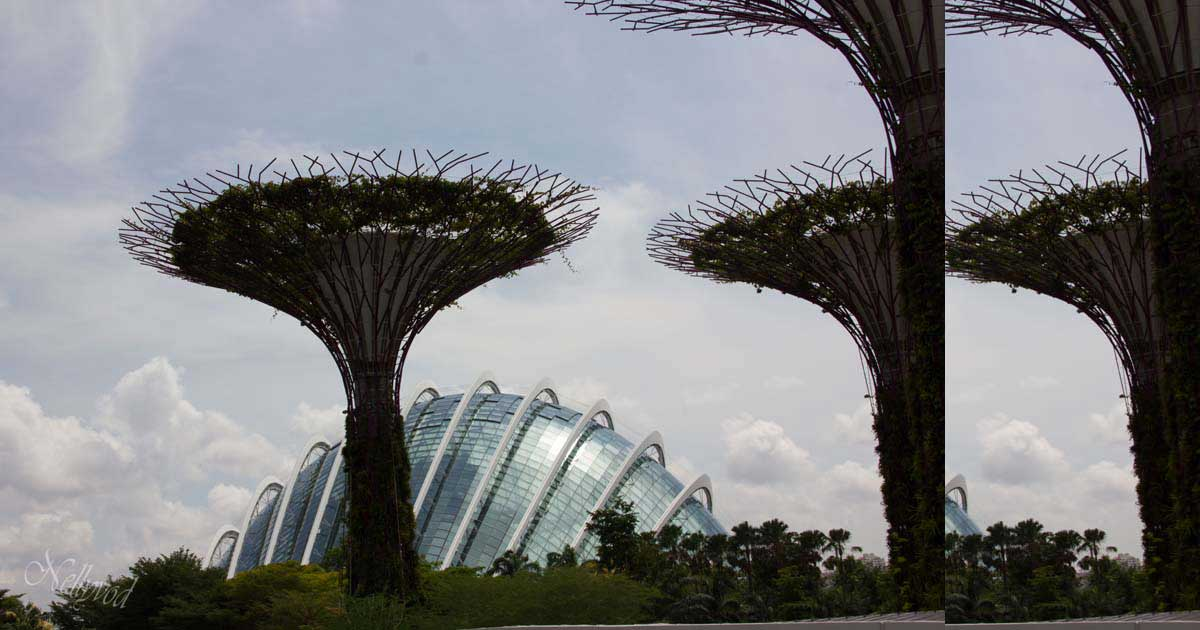 Singapure-Botanic-28