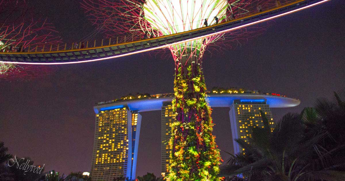 Singapure-Botanic-3