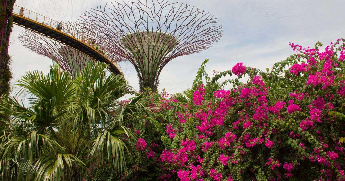 Singapure-Botanic-31