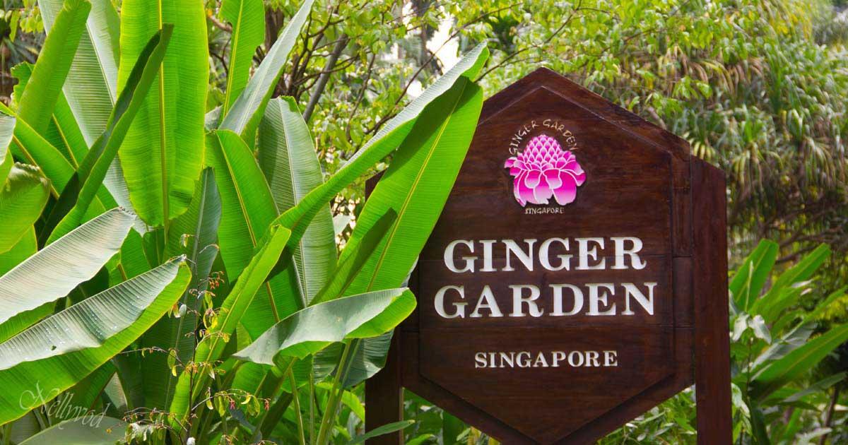 Singapure-Botanic-35