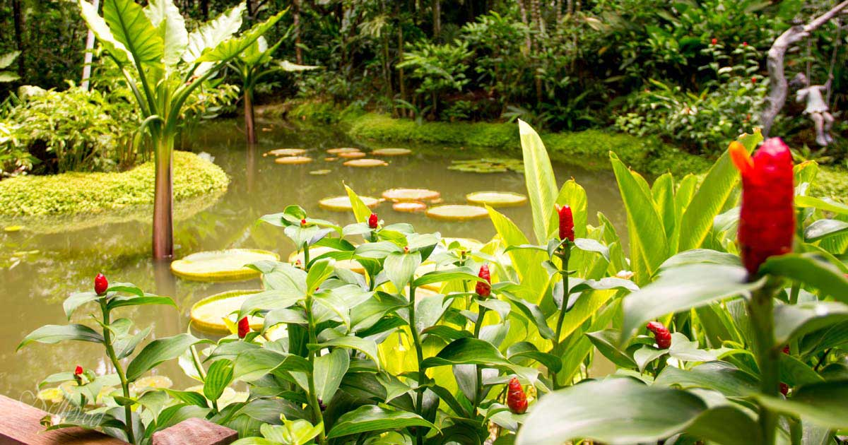 Singapure-Botanic-37