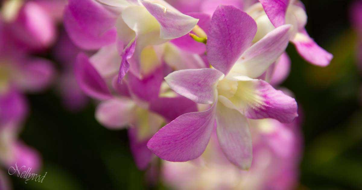 Singapure-Botanic-40-Copy