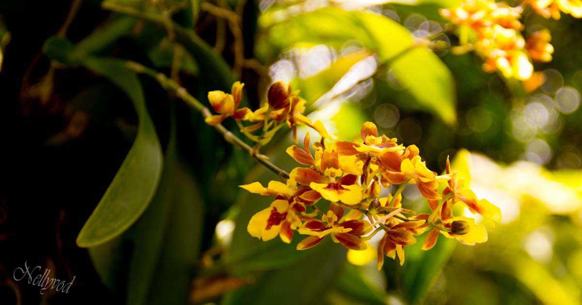 Singapure-Botanic-43-Copy