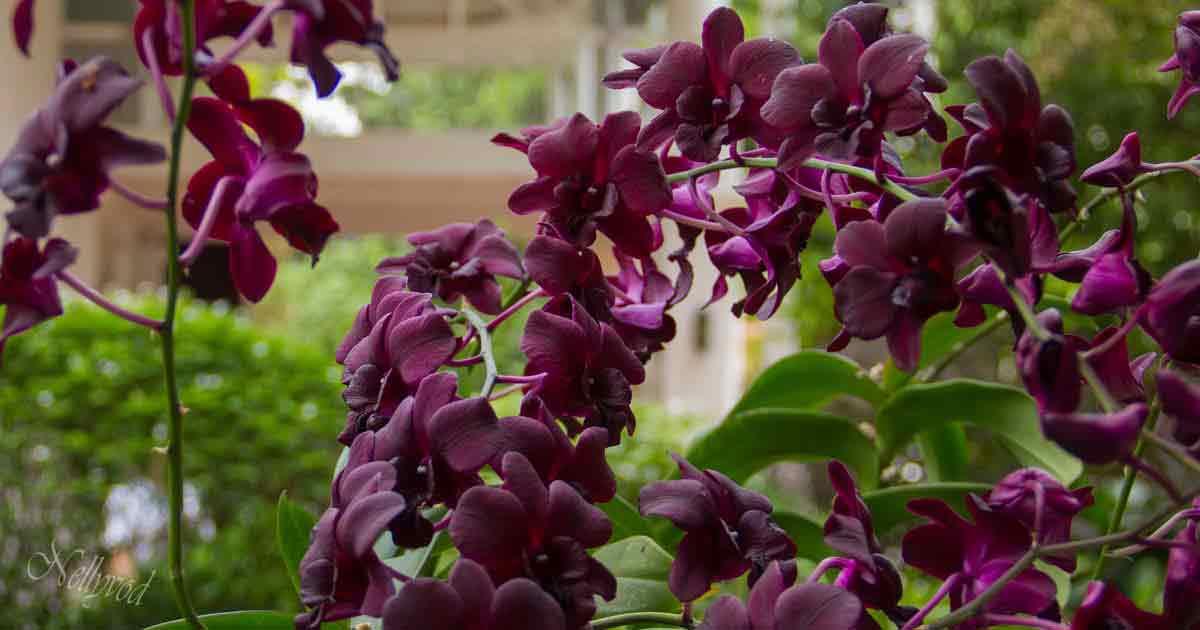 Singapure-Botanic-55