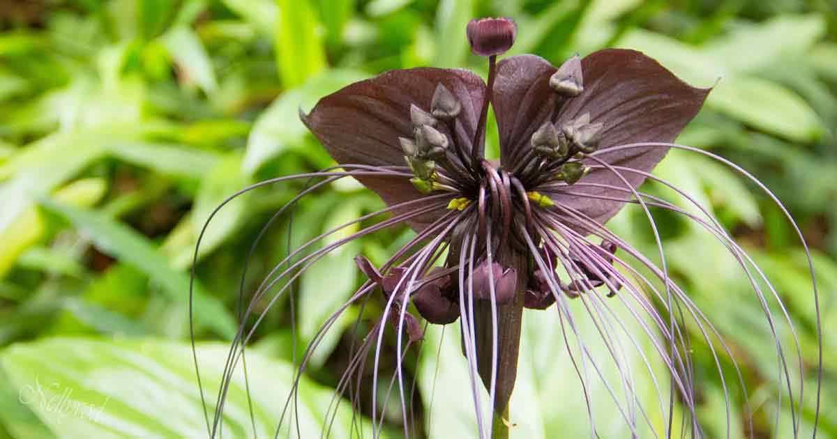 Singapure-Botanic-56