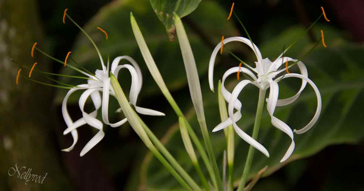 Singapure-Botanic-66