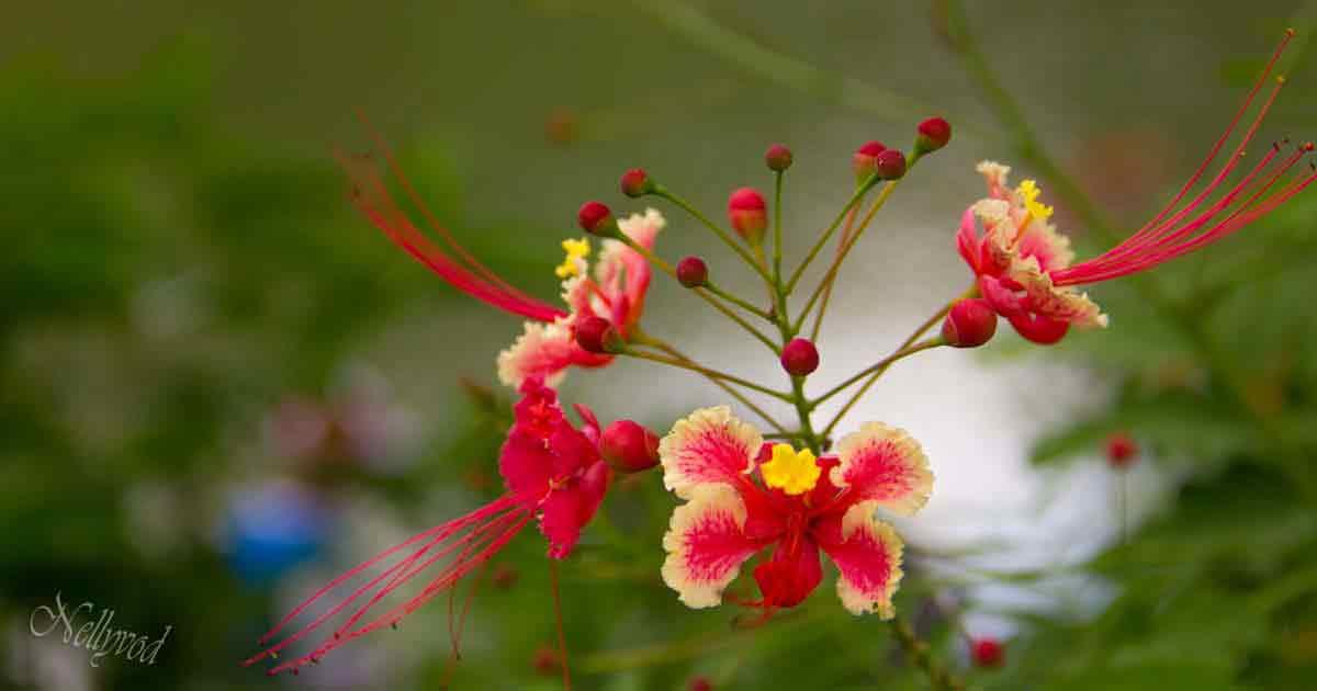 Singapure-Botanic-84