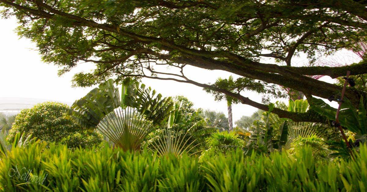 Singapure-Botanic-9