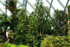 Singapure-Botanic-13