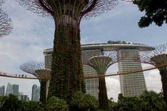Singapure-Botanic-29