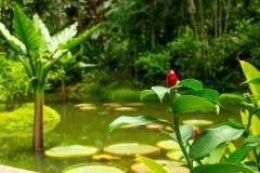 Singapure-Botanic-38