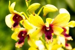 Singapure-Botanic-41-Copy