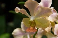 Singapure-Botanic-45-Copy