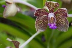 Singapure-Botanic-67