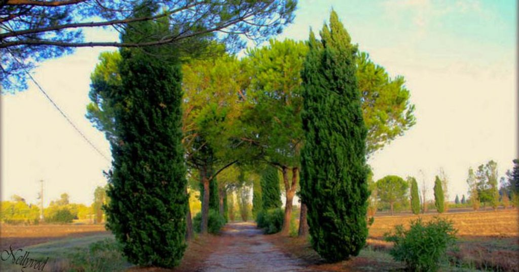 Пътят към Вила Lioncini