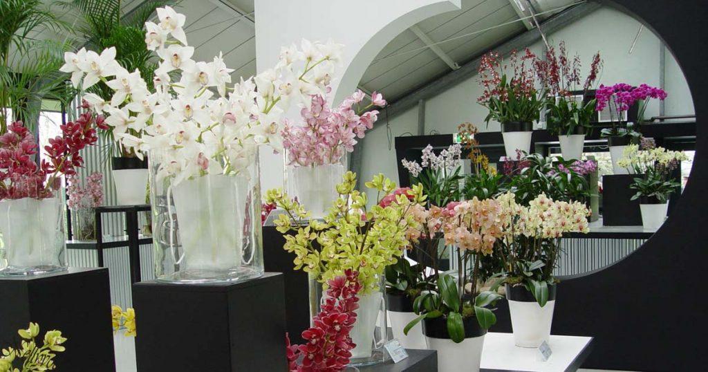 Разнообразие от орхидеи