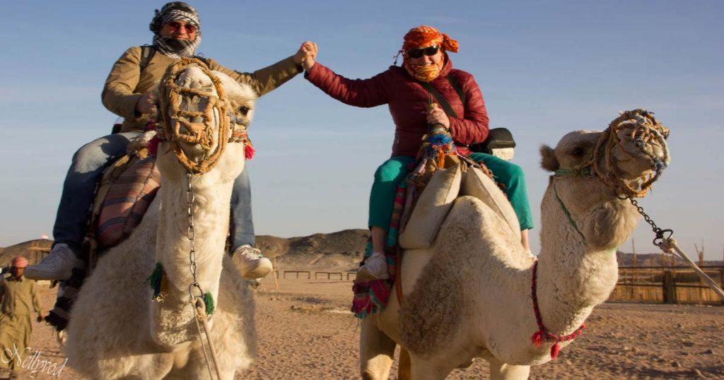 На камили