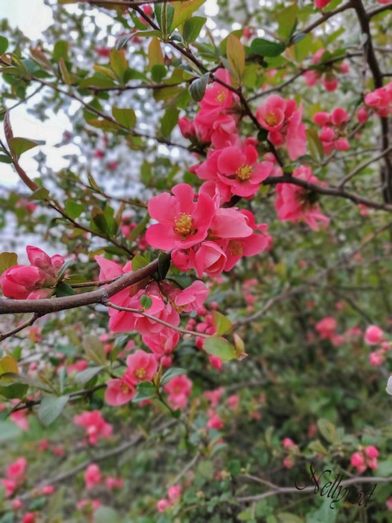 Пролет в София